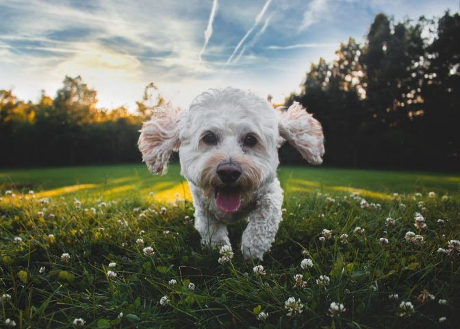 pet friendly vacation whistler